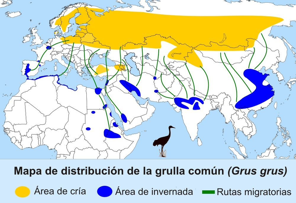 Distribution of common crane Yellow : breeding area Blue : wintering area green line : route  Picture from https://en.wikipedia.org/wiki/Common_crane