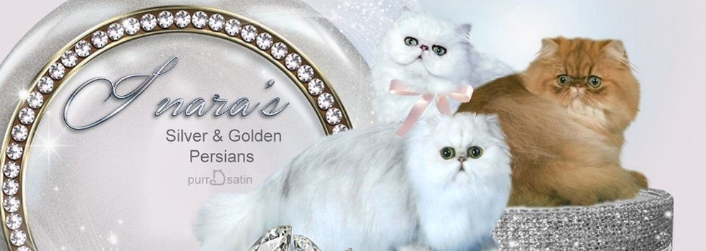 Inara's Silver & Golden Persians