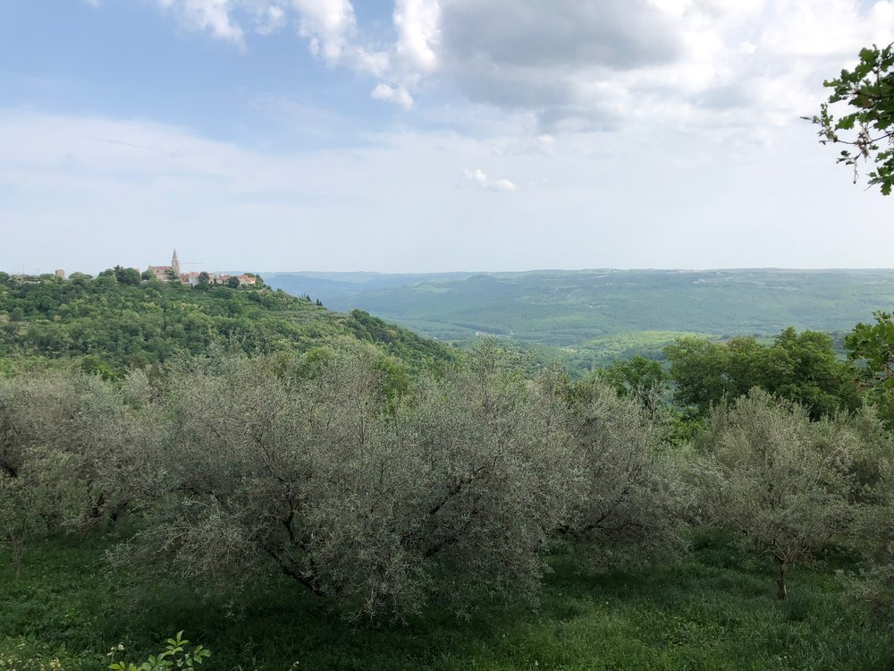 Hilltop town of Groznjan (Grissignana) inland Istria