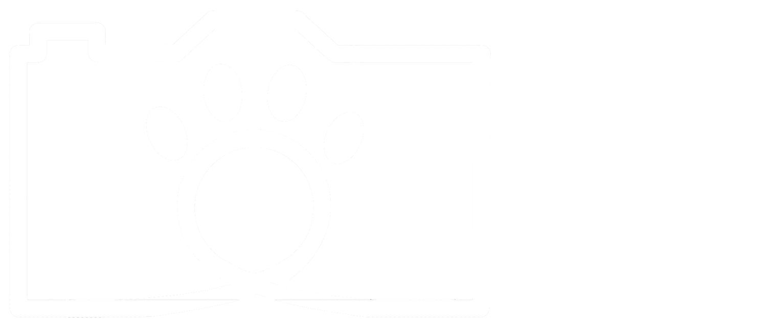 The Wild Focus Project
