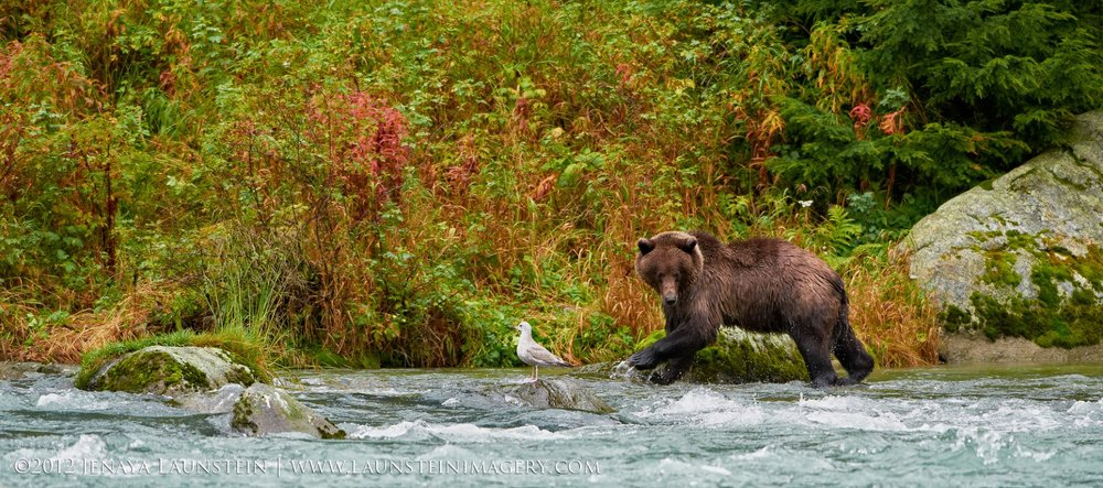 12-Jenaya-Launstein-Grizzly-Fishing-1920.jpg