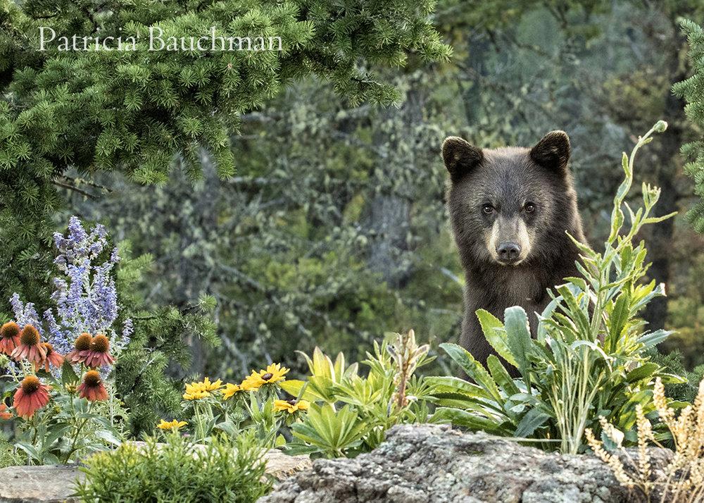 Black Bear in the Garden