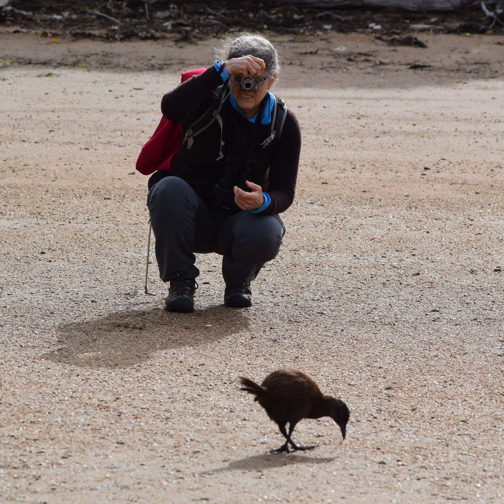 My mom gets acquainted with a curious weka (a flightless rail) on Ulva Island, off the southern coast of New Zealand's South Island.