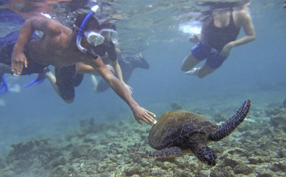 Don't be an ignorant jerk like these snorkelers harassing a sea turtle. By  For the Sea Productions.