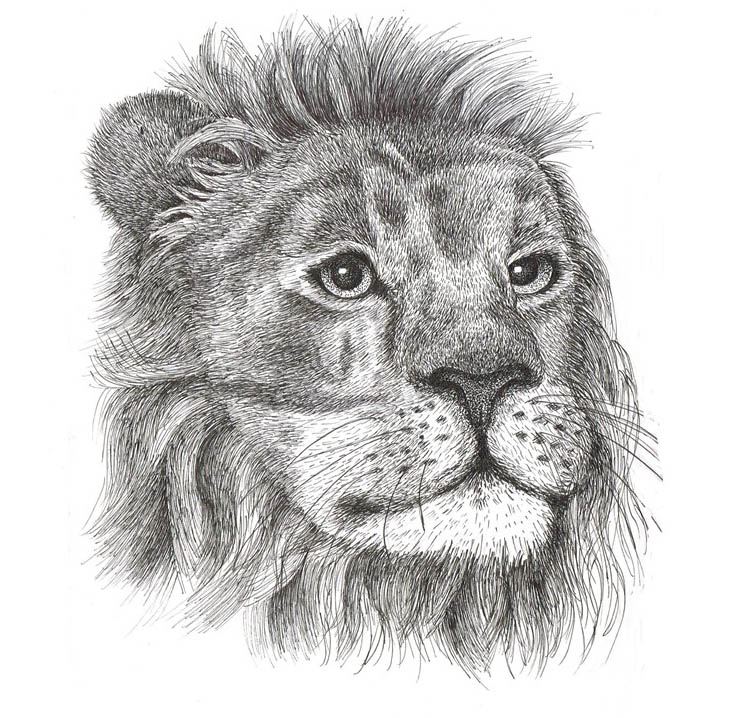 My wonderful and talented friend Rebecca John provided this pen-and-ink drawing for the cover of  Kruger National Park: Animal Tales . Check out more of Rebecca's science communication work on  her blog .