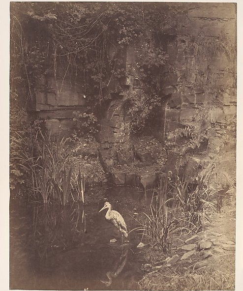 Piscator No. II, by John Dillwyn Llewelyn, 1856, via the  Metropolitan .