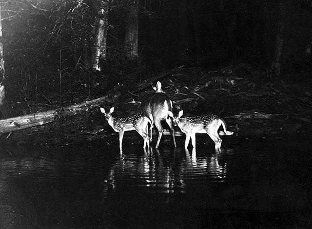 Early flash photography of wild deer by George Shiras III, published in National Geographic in 1906, via  PetaPixel .