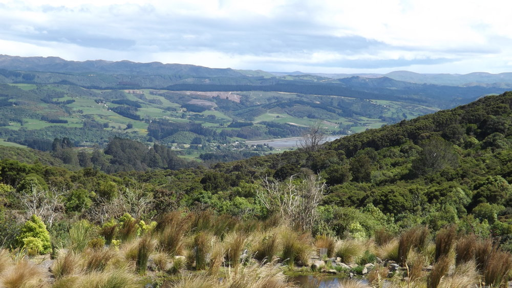 The view over the coastal Otago hills from the Orokonui Visitor Center. Image by  Allison Brown
