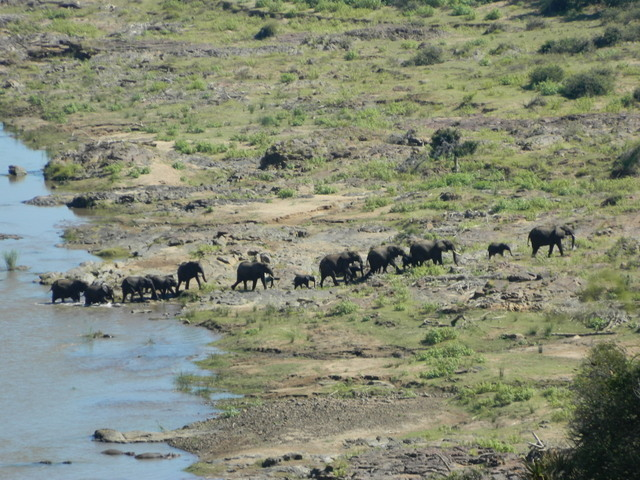 These elephants in Kruger National Park in South Africa are a few of the millions of organisms that make up this ecosystem.