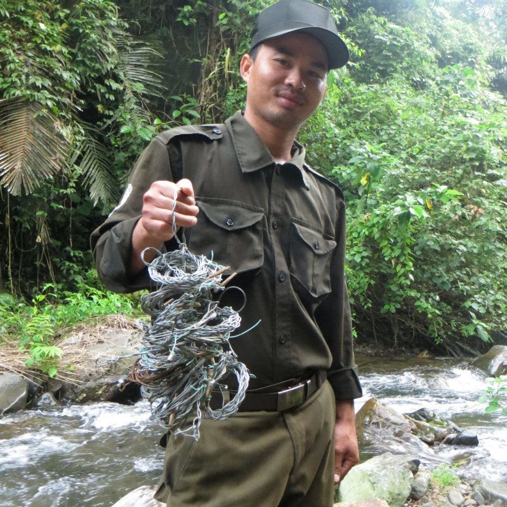 Nguyen Huu Hoa shows some of the snares collected during a routine patrol in the Annamite Mountains. Image by William Robichaud, via the  Saola Working Group .