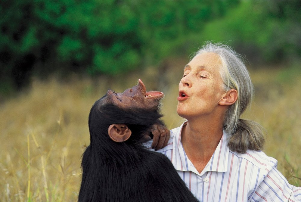 Jane Goodall is one of the most influential and inspirational conservationists in the world. Image from the  Jane Goodall Institute .