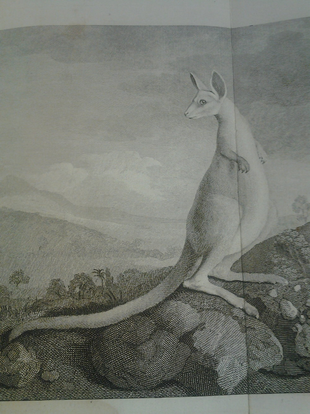 Cook, Banks, and Solander had a difficult time describing Australian wildlife.