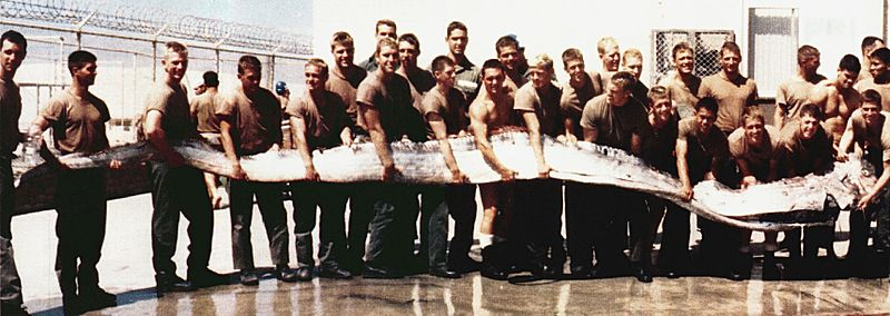 This 7 meter (23 foot) oarfish was found by U.S. servicemen in 1996. Image from the US Navy.