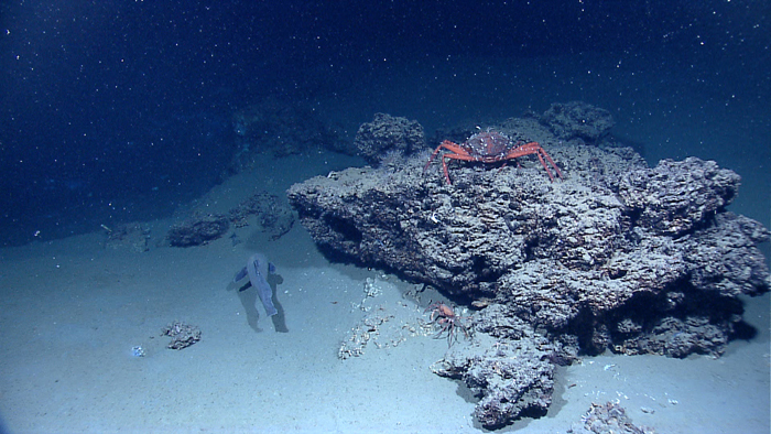 """Crabs consume detritus drifting down from above, also known as """"marine snow"""". Image from    NOAA   ."""