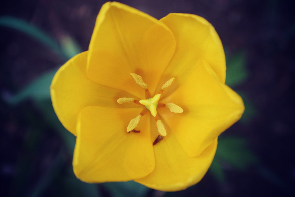 Yellow+Flower+Center2.jpg