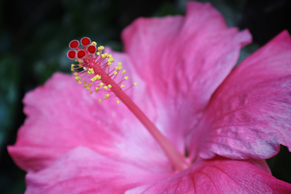 Exotic+Flower+Center2.jpg