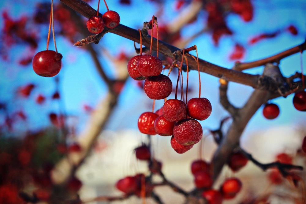 Wrinkled+Berries2.jpg