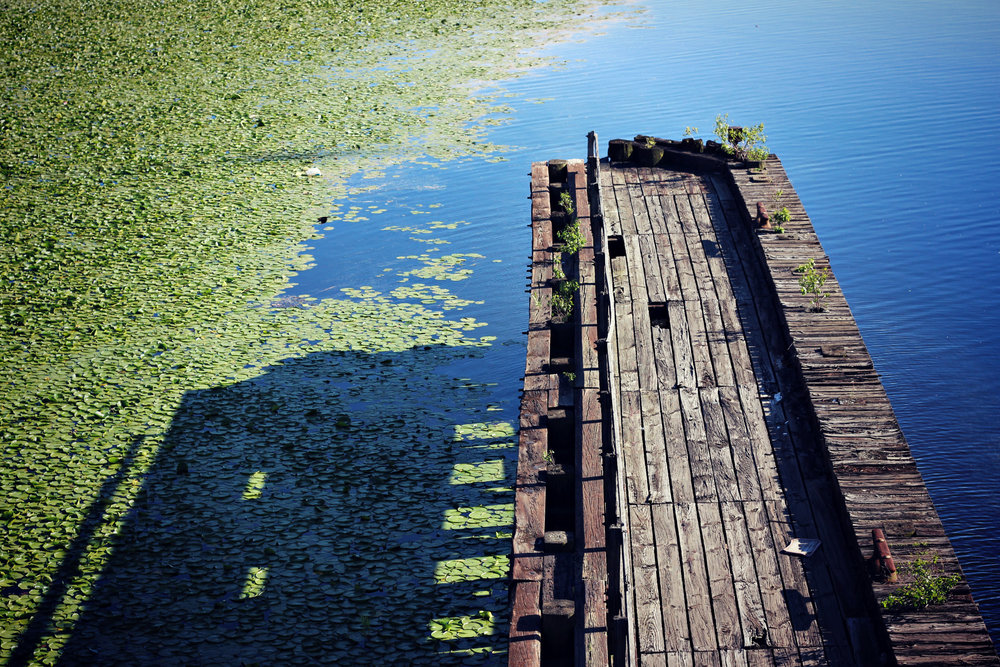 Lily+Pad+Pond2.jpg