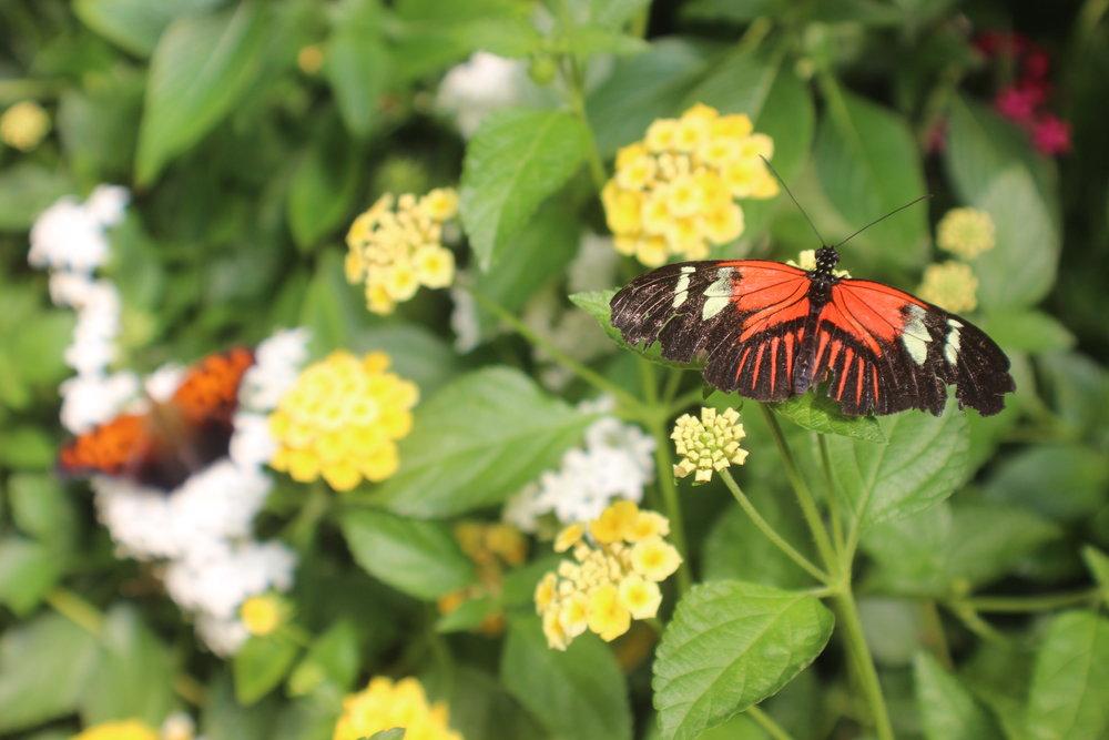 Butterfly1 ORIG.JPG