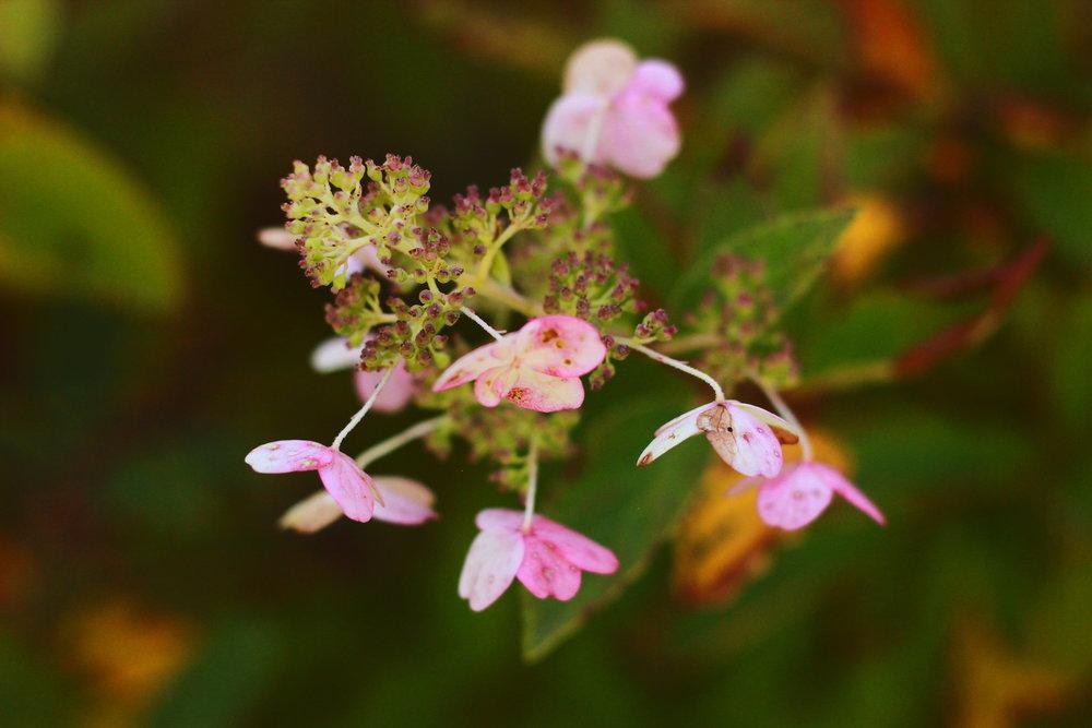 Beautiful Dying Flowers ORIG.JPG