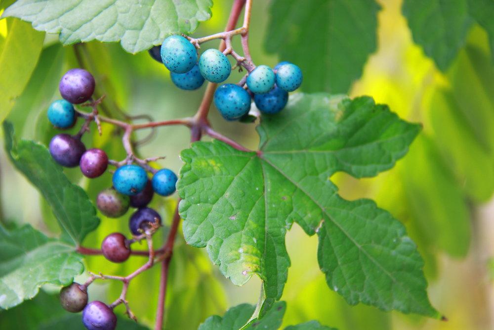 Colorful Berries ORIG.JPG