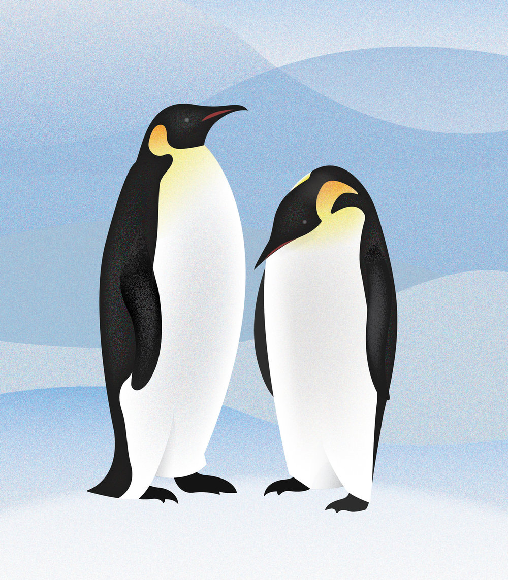 Penguins Graphic illustration.jpg