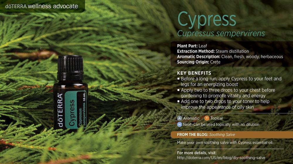 wa-cypress.jpg