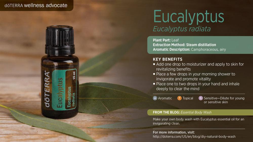 wa-eucalyptus.jpg
