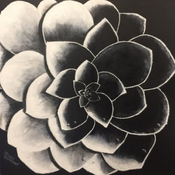 Succulent Shadows, 45cm x 45cm FOR SALE