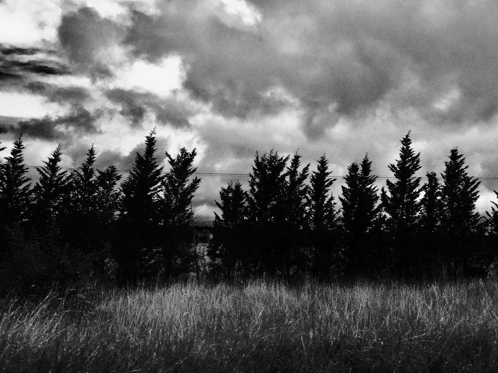 pine tree mystery.jpg