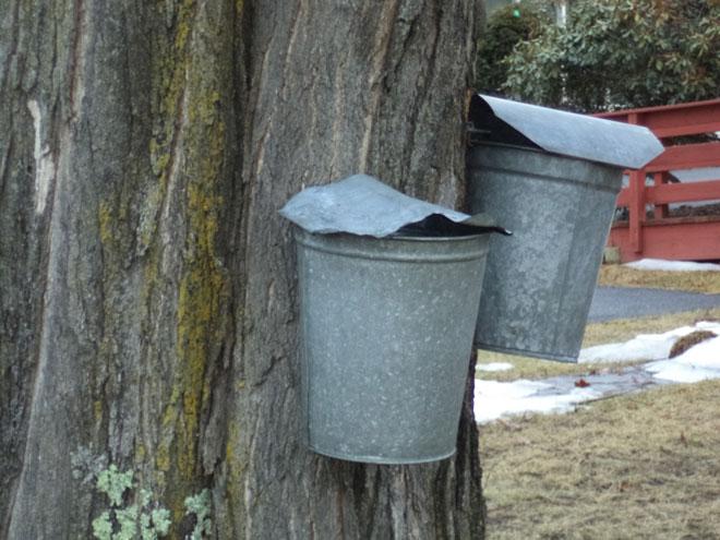 sap-buckets-web.jpg