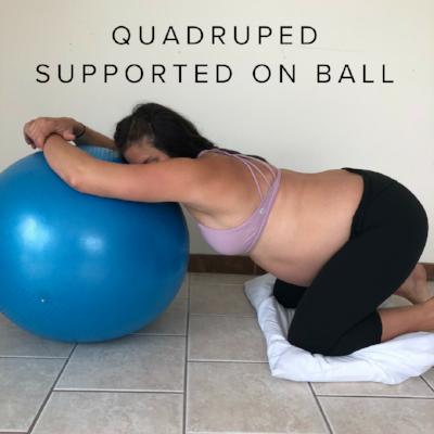 quadruped ball.png