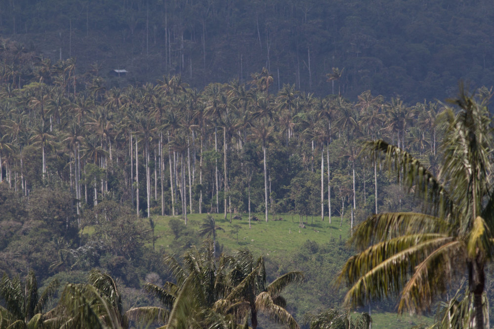 Palms 2.jpg