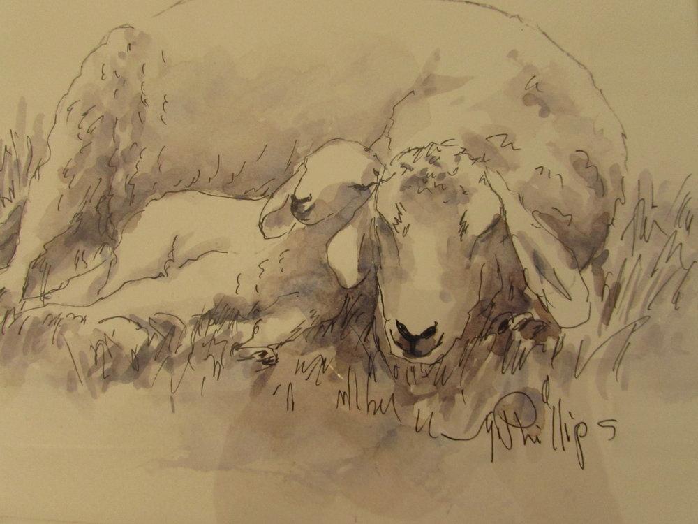 Sleeping Sheep ink