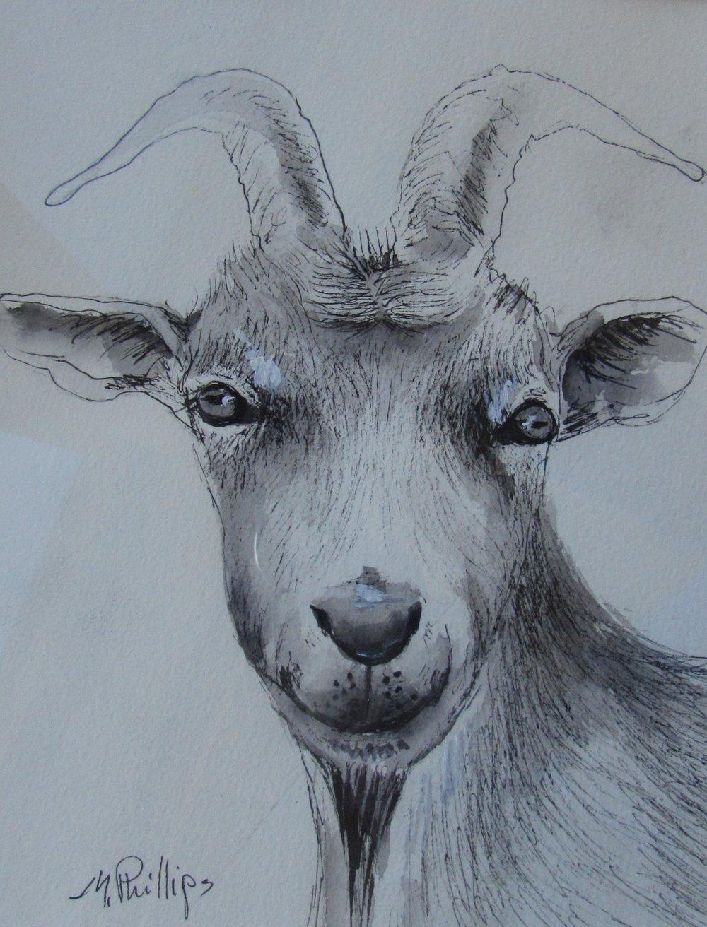 Goat inl