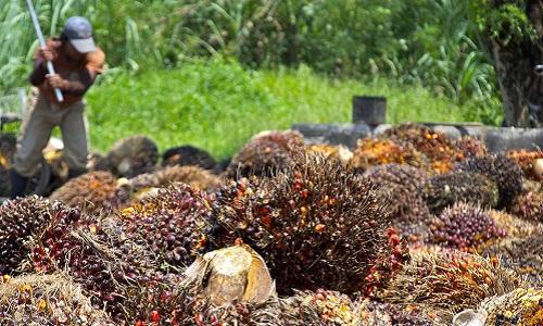 fruit-harvest-crop.jpg