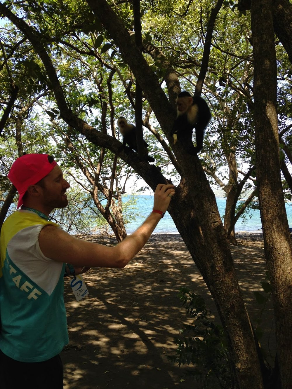 costa-rica-liberia-monkey-beach-feeding