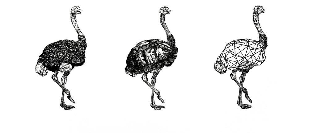 avestruz site.jpg