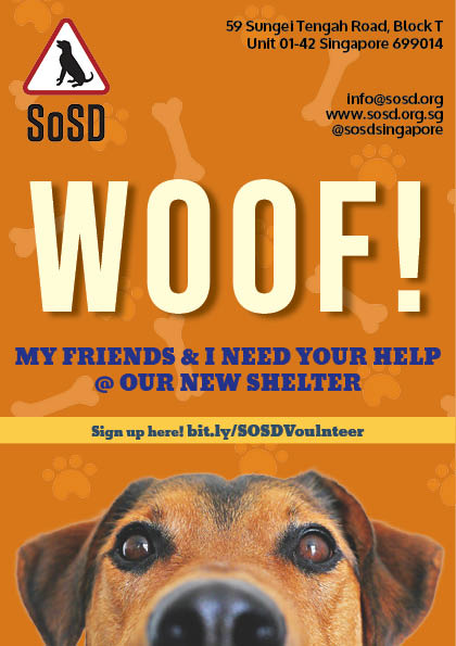 Flyer Design for Save our Street Dogs