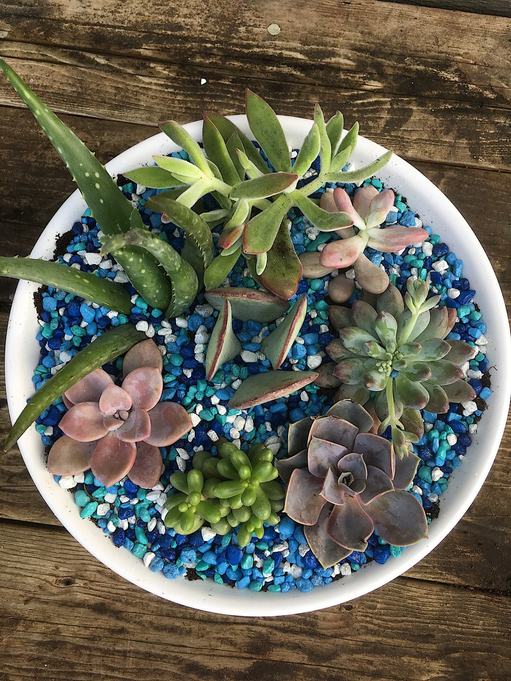 potted succulent garden 3.jpeg