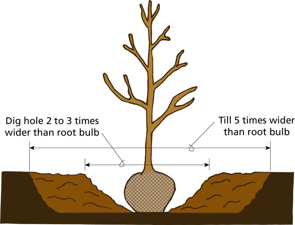 Tree planting illustration .jpg
