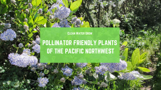 Pollinator Friendly Plants Of The Pacific Northwest Clean Water