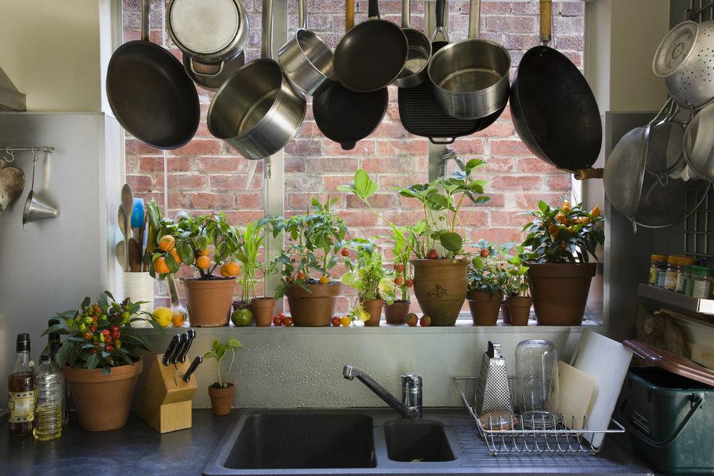 Kitchen Houseplant Cover.jpg