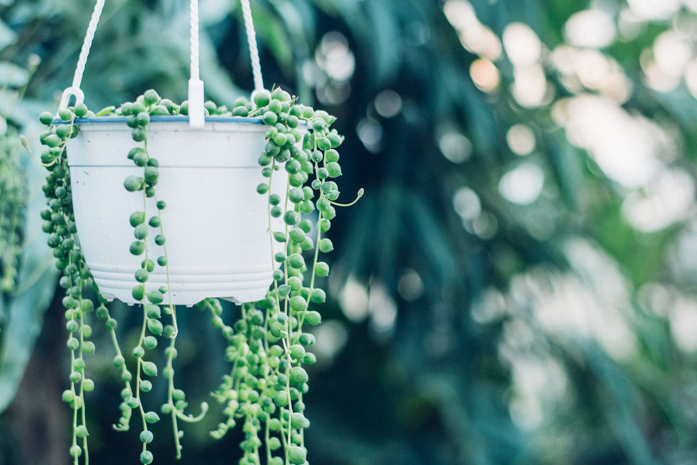 Kitchen - String of Pearls .jpg