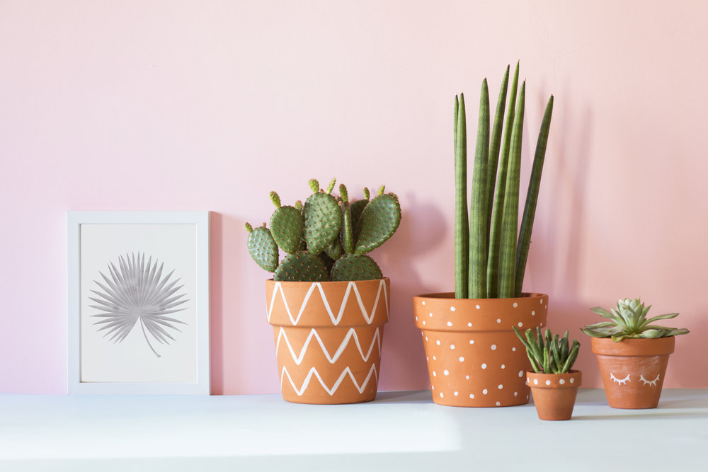 Office - Cacti and Succulents.jpg
