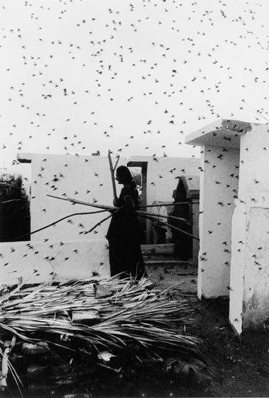 Graciela Iturbide,  Cemetary , 1988.