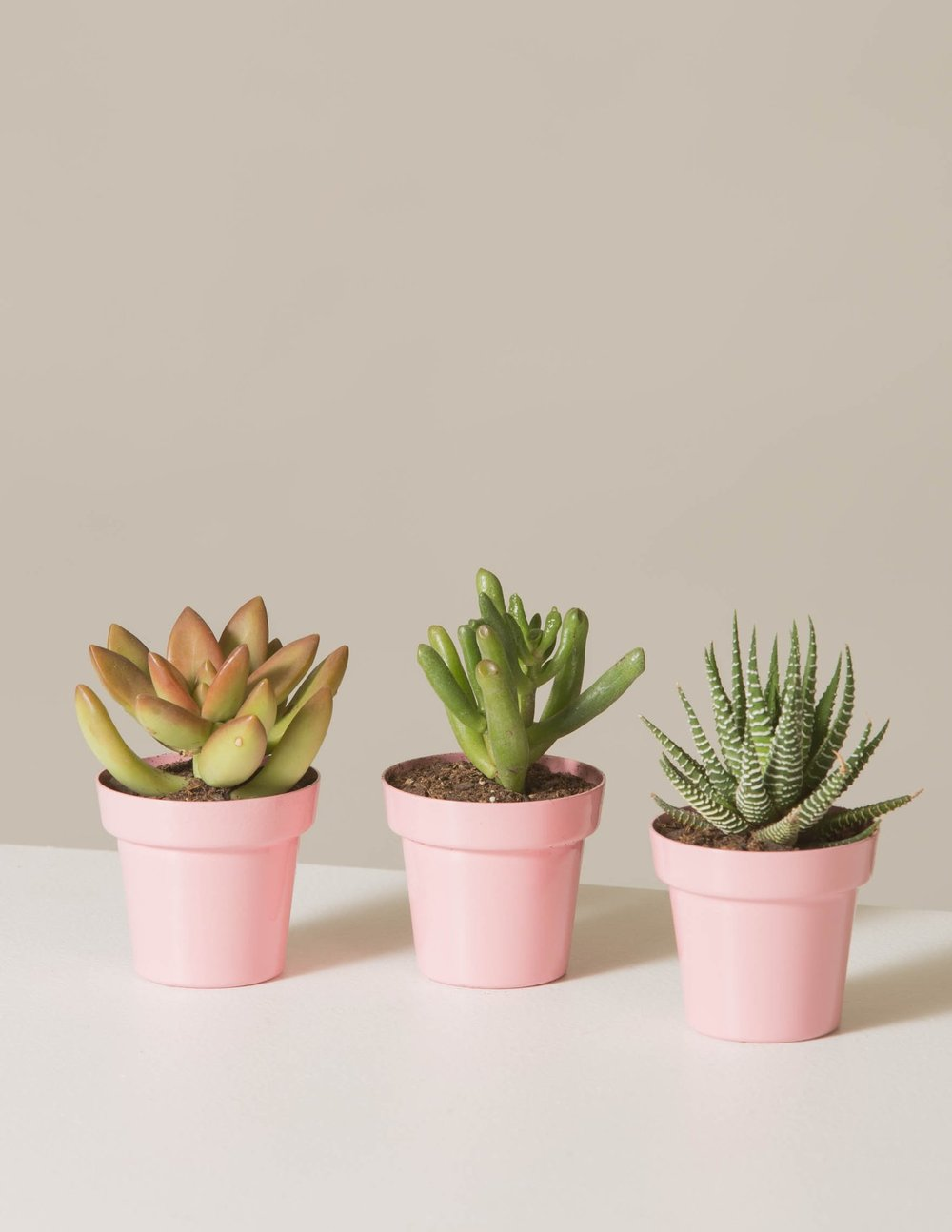 Succulents trio available at  The Sill .