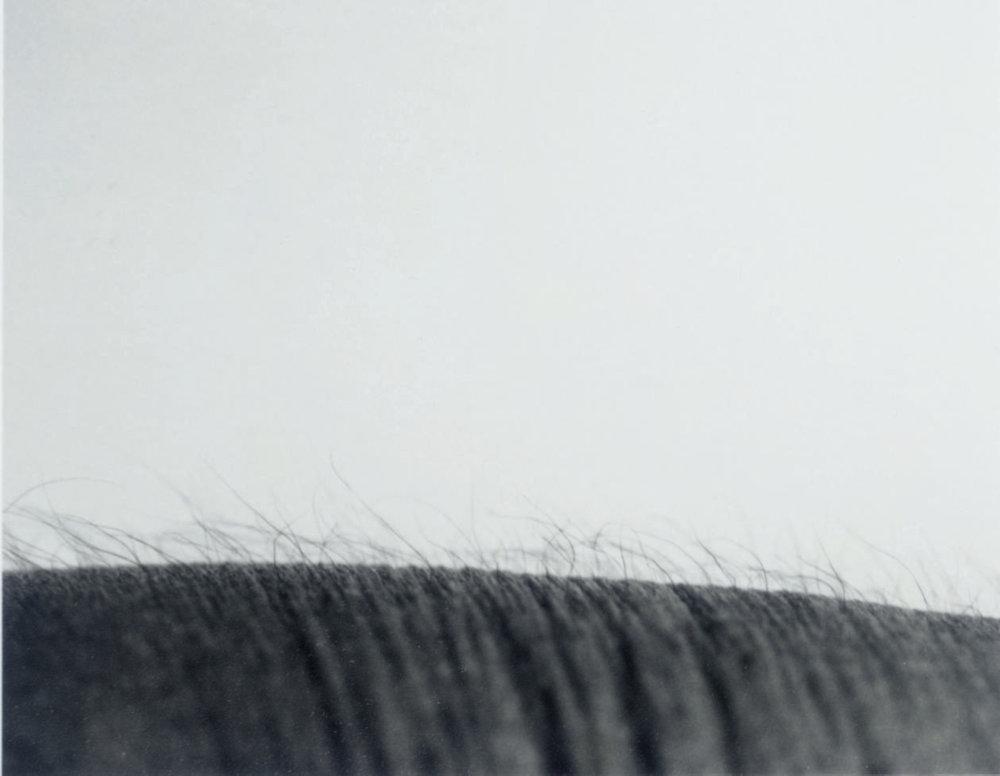 Study After Untitled Landscape, 1987