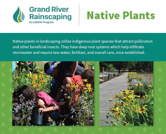 NativePlants_RainscapingCard.PNG