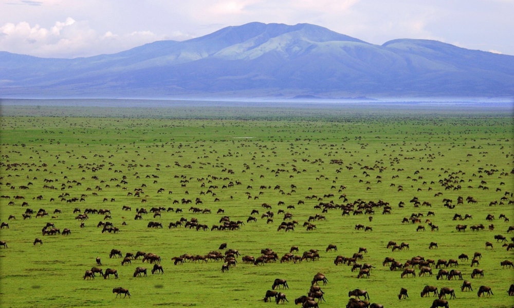 cropped-tanzania-background-image-serengeti-buffalo-2.jpg